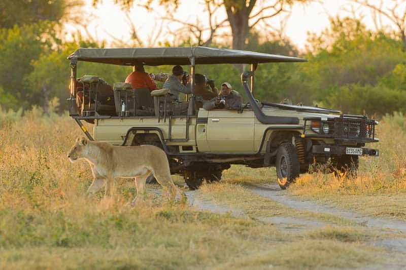 Botswana Classic Reverse