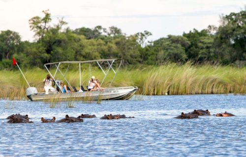 Camp Moremi Gallery12