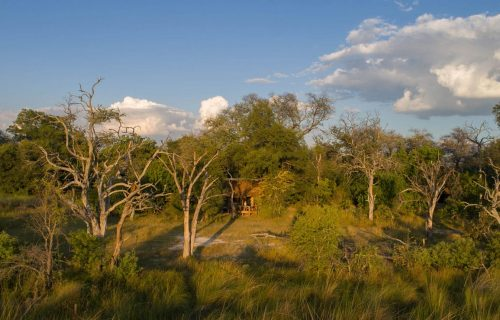 Camp Moremi Gallery27