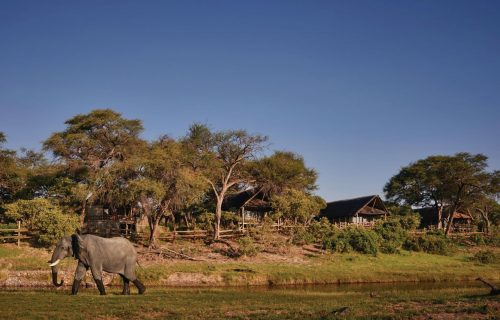 Savute Elephant Camp Gallery1