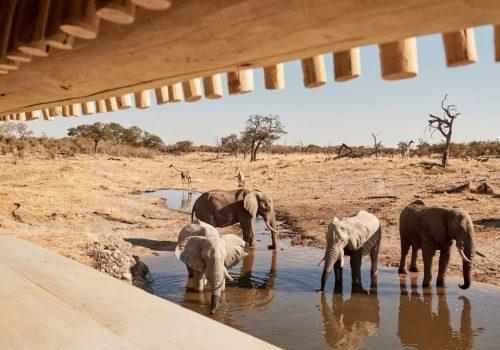 Savute Elephant Camp Gallery19