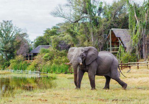 Savute-Safari-Lodge-Gallery19