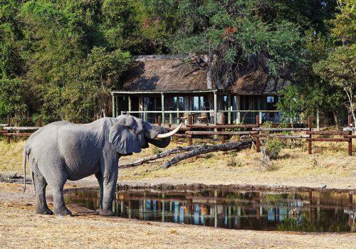 Savute-Safari-Lodge-Gallery20